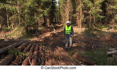 Lumberjack inspect saw off logs