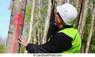 Lumberjack near marked tree in forest