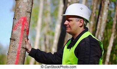Lumberjack near marked tree - Lumberjack near marked tree