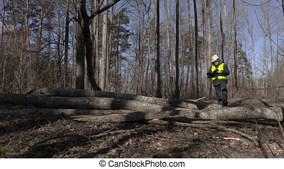 Lumberjack reading near fallen trees in park