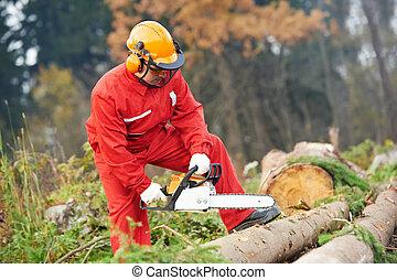 lumberjack, trabalhador, chainsaw, floresta