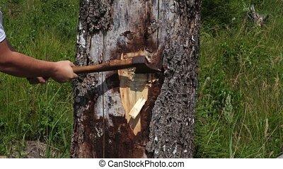 Lumberjack using ax near tree