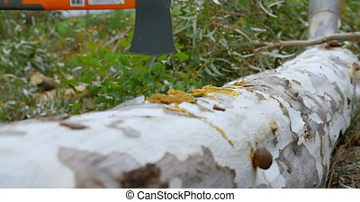 Lumberjack with axe cutting tree trunk 4k - Close-up of ...
