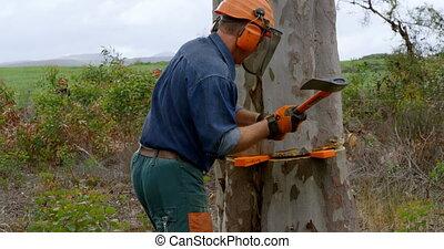 Lumberjack with axe cutting tree trunk 4k - Lumberjack with ...