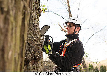 Lumberjack with chainsaw and harness pruning a tree. Arborist cuting tree branches.