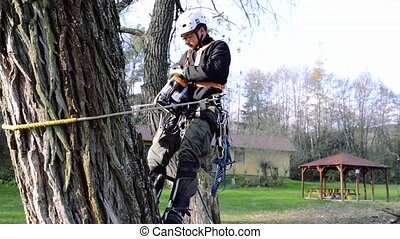 Lumberjack with chainsaw and harness pruning a tree.