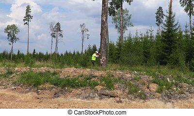 Lumberjack working in forest