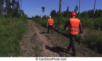 Lumberjacks checking damaged tree