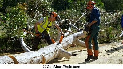 Lumberjacks cutting fallen tree with axe 4k - Lumberjack ...