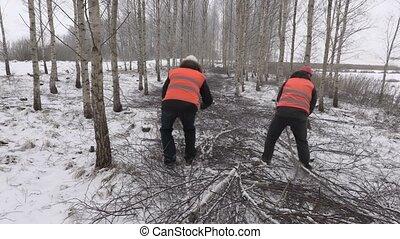 Lumberjacks working in birch grove
