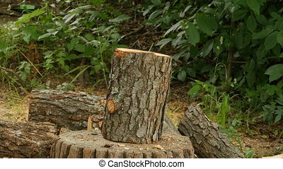 lumberman chopping firewood  with an ax close to
