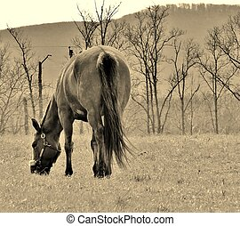 Lumen Equus - Horse Eating Grass