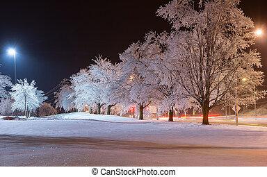 lumière, après, arbres, neige fondue, orage glace