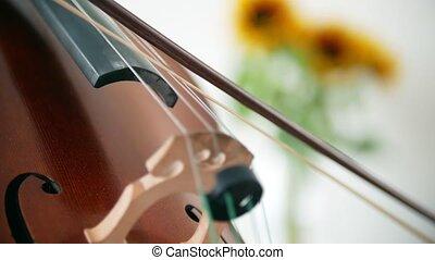 lumière du jour, salle, violoncelle, jouer