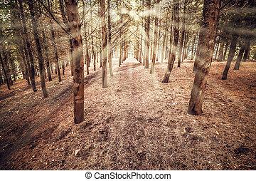 lumière, ensoleillé, arbres, matin, tôt, forêt, rayon
