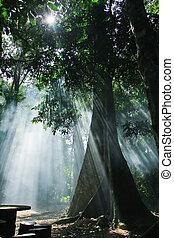 lumière soleil, nature