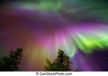 lumières, borealis), (aurora, nord