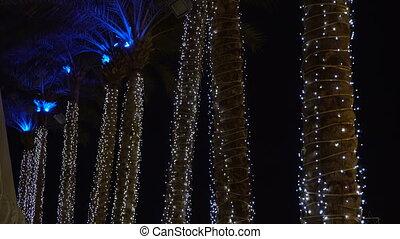 lumières, paume, lot, arbres