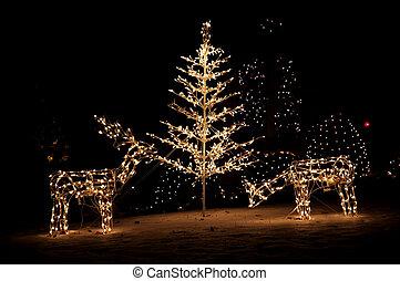 lumières, yard, noël