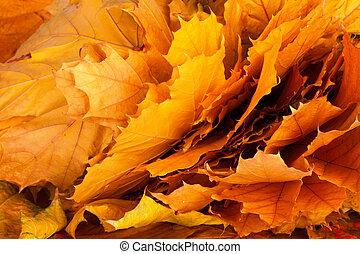 luminoso, e, coloridos, fundo, de, caído, outono sai
