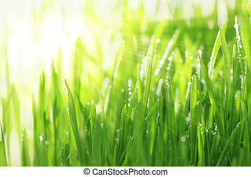 luminoso, ensolarado, fundo, com, capim, e, água, gotas,...