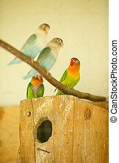 luminoso, exoticas, papagaios, sentar, ligado, um, bloco, em, gaiola