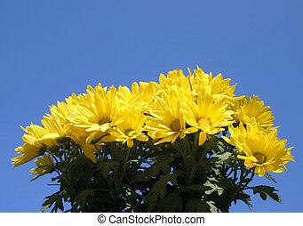 luminoso, fiore, giallo