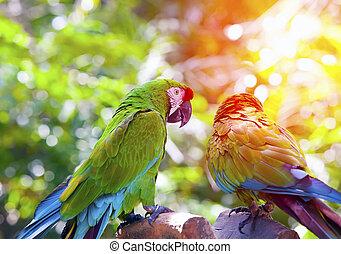 luminoso, grande, tropicais, papagaios, sentar, uma filial