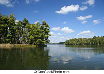 luminoso, sol, lago, selva