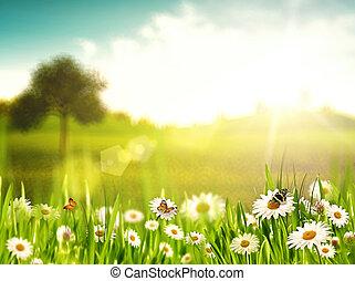 luminoso, verão, afternoon., natural, fundos, com, beleza, chamomile, flores