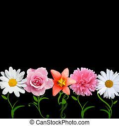 luminoso, vettore, -, fiori, fila