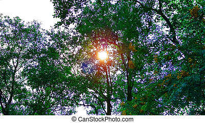 Luminous sun through the trees from below sun beautifully illuminating