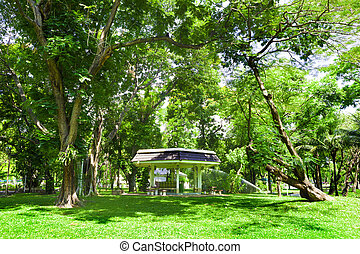 lumphini park.Bangkok.Thailand