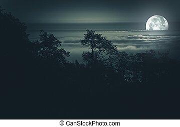 luna piena, fondo, notte