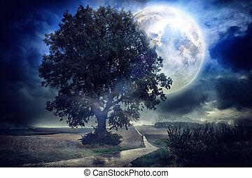 luna piena, sopra, campo cereale