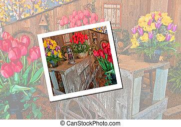 lunch, ogród, wóz, poza