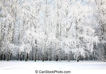 lund, rysk, vinter, björk