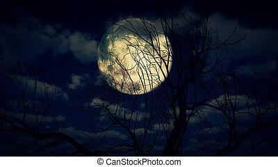 lune, arbre, nuit