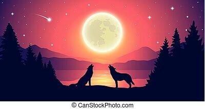 lune, deux, entiers, lac, loups, ciel étoilé, hurlement