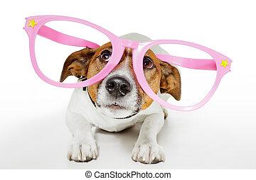 lunettes, rigolote, chien