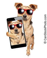 lunettes soleil, mobile, selfie, chien, isolé, poser, coup