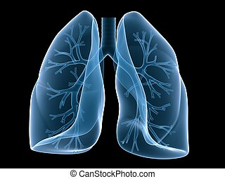 lung and bronchi - 3d rendered illustration of human lung...