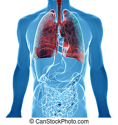 lung cancer in x-ray view - human body under X-rays isolated...