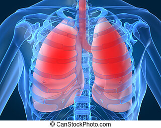 lung infection - 3d rendered illustration of highlighted ...