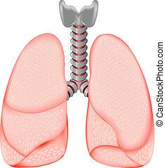 lungan, mänsklig