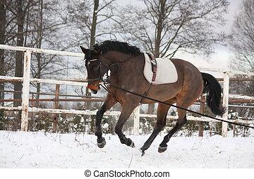 lunge, bruin paard, werkende