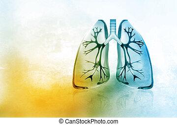 lungen, menschliche