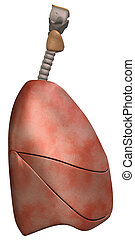 Lungs Side View - 3D Rendering of the Human Lungs, including...