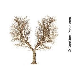 lungs., ter, sem, eco, concept., árvore, isolado, um, experiência., forma, outro, human, branca, folhas, seasons., folhas, mudança, lado