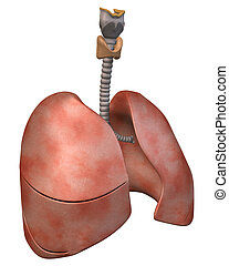 Lungs Three_Quarter View - 3D Rendering of the Human Lungs,...
